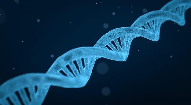 Génétique et poils sur les seins