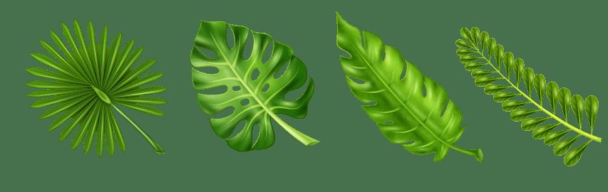 Palmier nain pour grossir de la poitrine